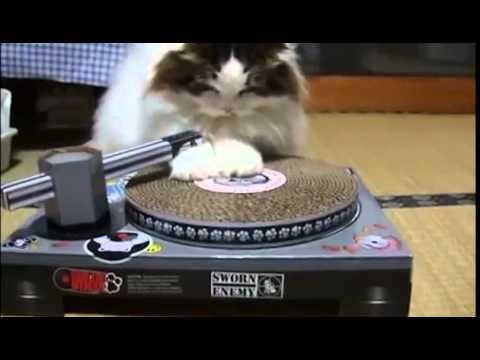 Cardboard Cat Scratch DJ Deck Scratching Pad